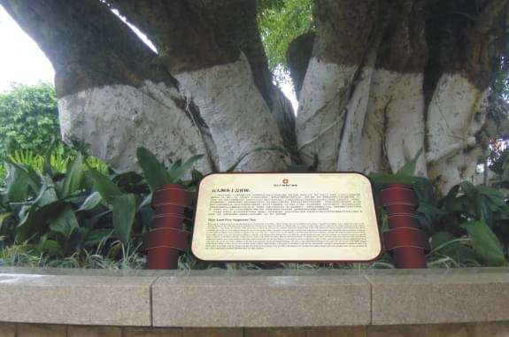 园林标识系统-吉祥树说明牌
